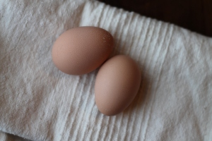 First Eggs