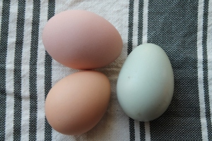 Trio of multi-colored eggs