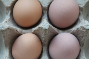 Pink and brown eggs