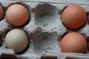 Compare the eggs
