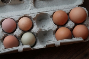 My eggs vs. co-op eggs