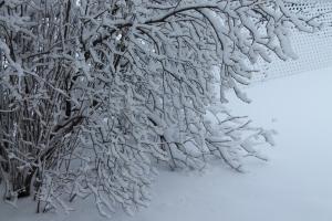 Snowy April