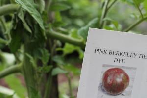 Pink Berkeley Tie Dye