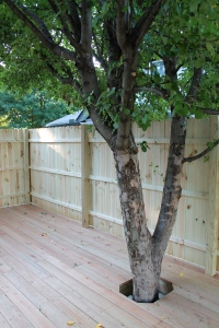Deck around the apple tree