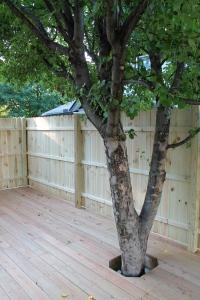 Deck around the apple tree