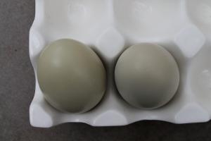 Roz's Eggs