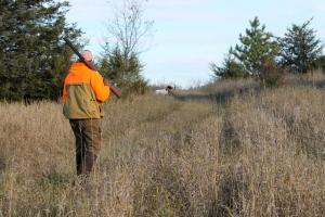 Jay hunting